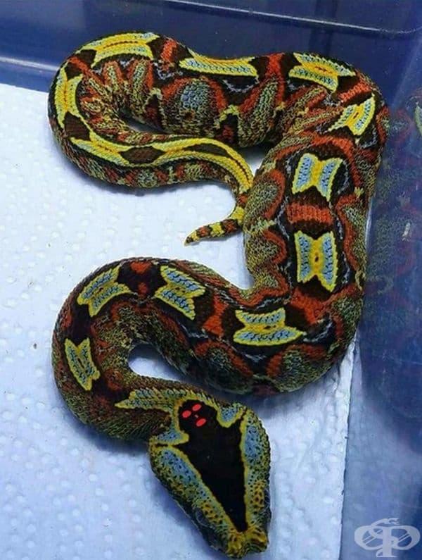 Тази красива змия има изобразен призрак на главата си.