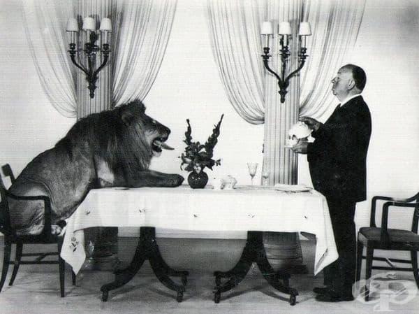 Известният кинорежисьор Алфред Хичкок и талисманът на филмовата компания MGM пият чай заедно.