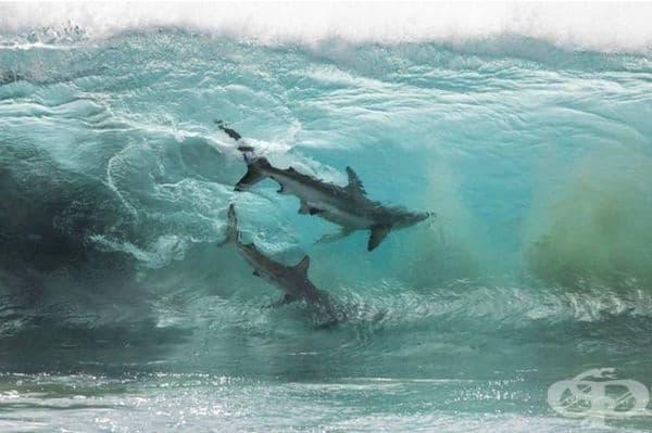 Не е препоръчително да плувате сред тези приятели.