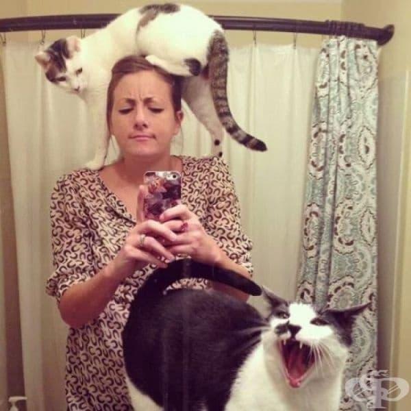 Всичко, което трябва да са знаете, за това какво е да сте собственик на котка.