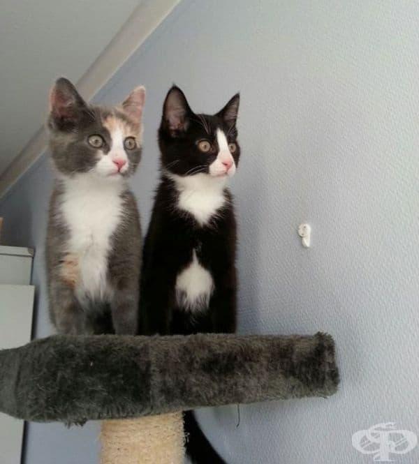 Котки забелязват птици през прозореца за пръв път.