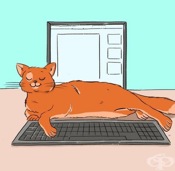 Не се оплаквайте от котката си, ако се е излегнала на лаптопа. Тя просто търси вашето внимание.