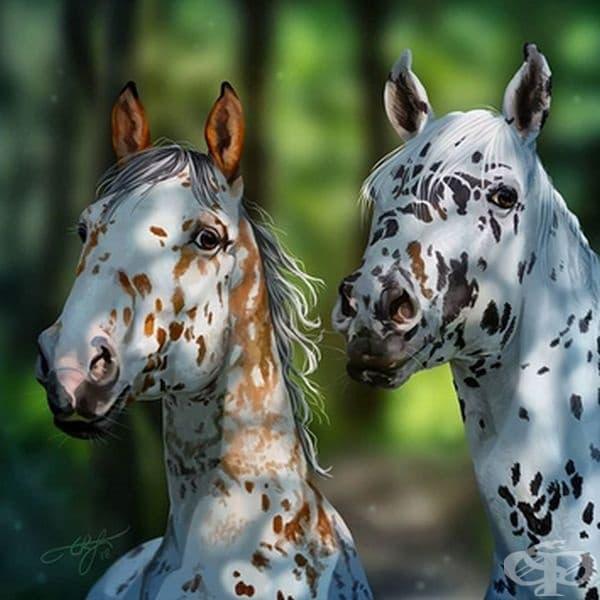 15 удивително красиви коне, от които няма да отделите поглед
