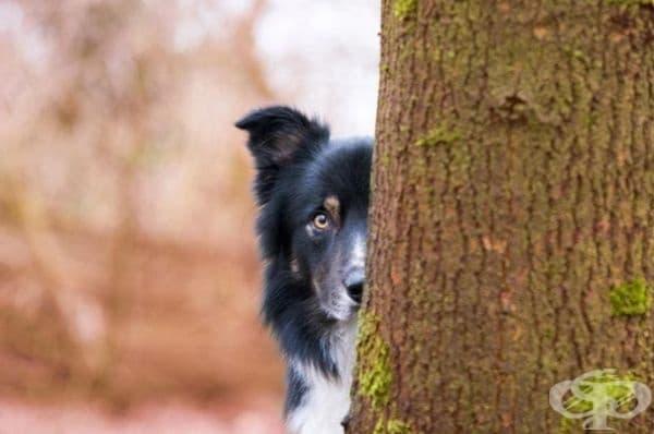 """Трето в категорията """"Обичам кучетата"""". Фотограф: Кирстен ван Равенхорст."""
