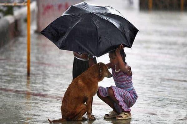 Деца, подслонили под чадъра си бездомно куче, по време на силни валежи в Мумбай, Индия.