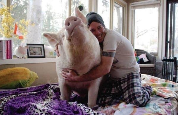 Дерек и Стив възнамеряват да продължат да ценят и възпитават домашния си любимец. Ако порасне още повече, те обмислят да си купят по-голяма къща.