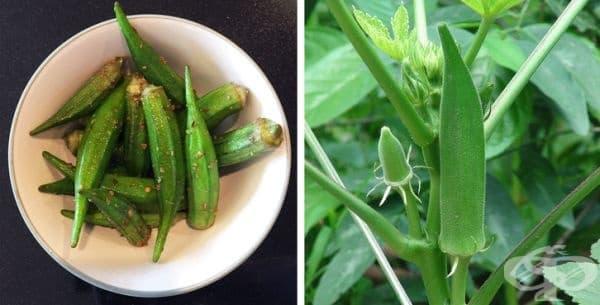 Но пък бамята е плод, а не зеленчук. Наличието на семена вътре в бамята я класифицира като плод.