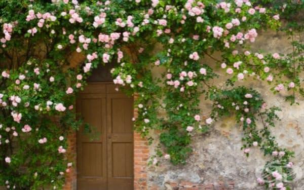 Входна врата в Тоскана, Италия.