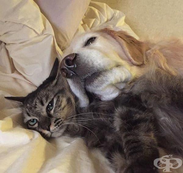 Друг пример за приятелство между котка и куче.