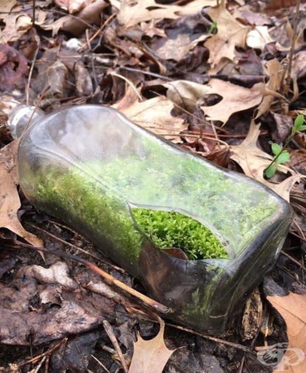 """""""Разхождайки се из гората, открих бутилка с мъх."""""""