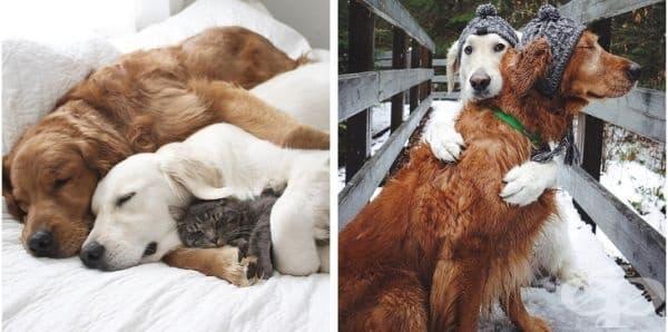 Те винаги са харесвали топлата прегръдка.