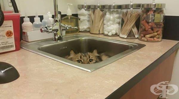 Отново в мивката.