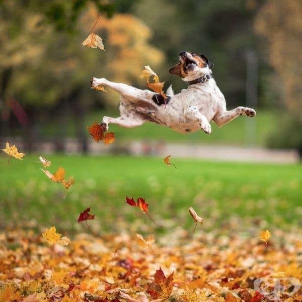 Куче нинджа