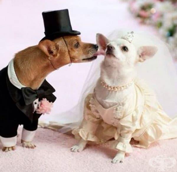 Младоженецът няма търпение.