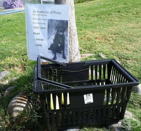 """""""Чудех се защо има толкова много топки за тенис в кучешкия парк, в който се разхождам""""."""