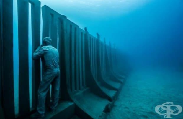 """Снимка """"Опс"""". Подводните папараци правят снимки на деликатния свят, който се нуждае от нашата помощ и защита. (Местоположение: Музей Атлантико, Испания)"""