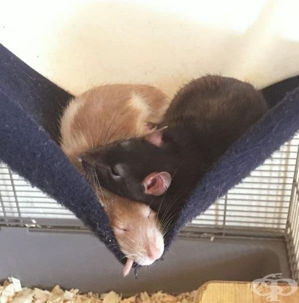 Тази малка двойка определено има най-сладките сънища.