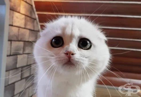 Може да простите всичко само като се вгледате в тези очи.