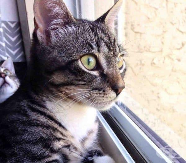 Котката на заден фон изведнъж изпадна в екзистенциална криза.