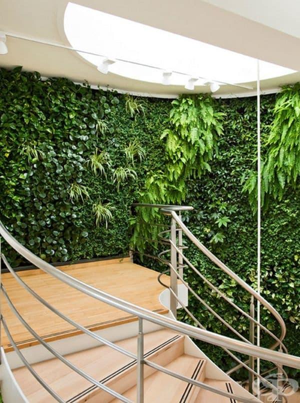 Зеленина във вашия коридор или по стените на стълбището.