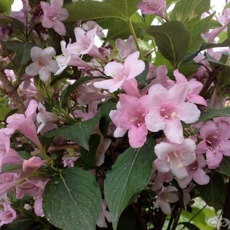 Пролетта идва в цветя, Твърдица, 2016