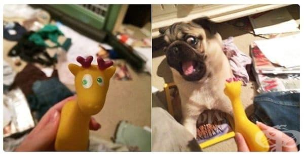 Майка ми взе тази играчка за кучето. Изглежда, че то не я харесва много.