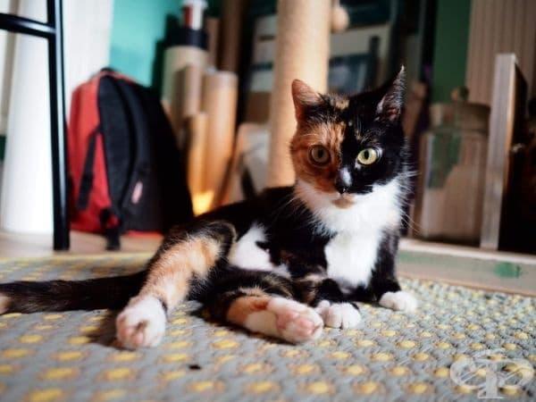 За какви красиви котки говорите? Как може някой да се сравнява с мен?