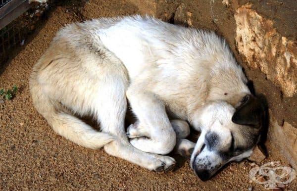 Кучетата се свиват по инстинкт, докато спят. Това им помага да задържат топлина и да се предпазят.