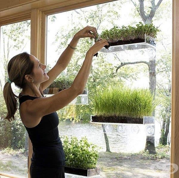 Рафтове с вендузи, които може да превърнете в малка градина с подправки.