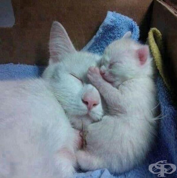 Нощна милувка.