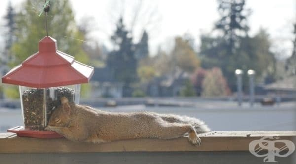 """""""Приятелката ми сложи храна за птичките. Този пакостник се настани точно там да спи."""""""