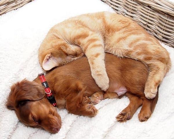 30 кучета и котки, станали най-добри приятели