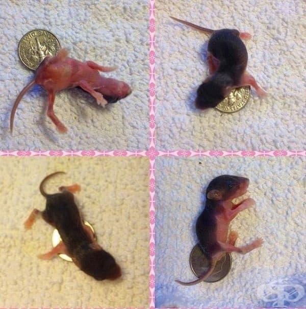 Мишка на 6 дена.