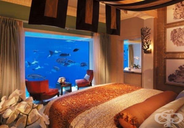 Настанете се в хотел със стена от аквариум.