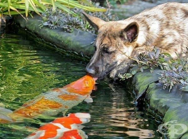 Различията нямат значение, когато има любов и разбирателство.