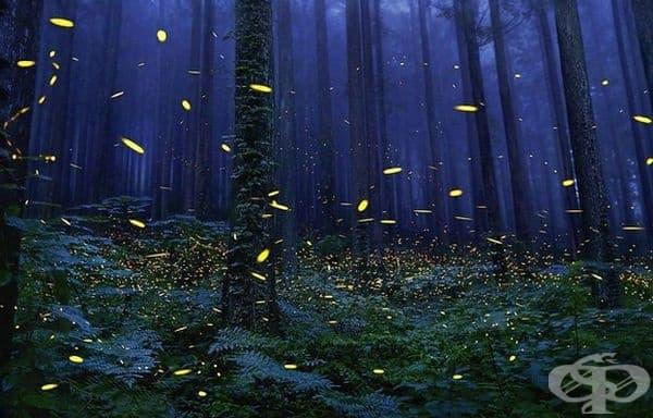 Светулки