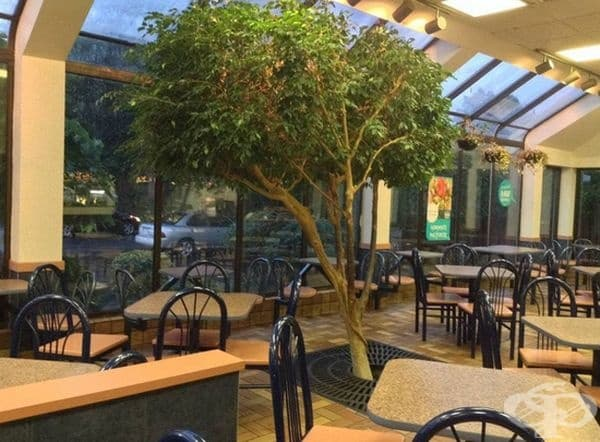 Ако искате да сте близо до природата, в този ресторант може да се насладите на истинско дърво, растящо в центъра на залата.