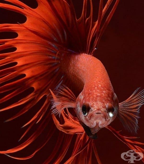 Тайландски фотограф улавя красотата на аквариумните риби по много елегантен начин