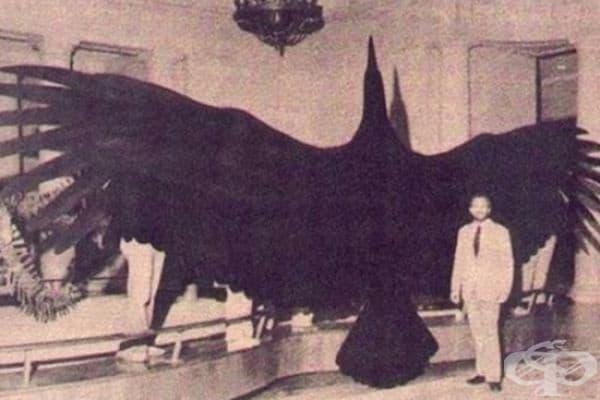 Аргентвис може би е най-голямата летяща птица, съществувала някога на Земята.