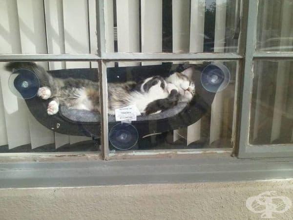 Собственикът на тази котка купува малко легло за своя домашен любимец. Той изглежда много щастлив.