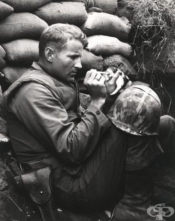 Войник храни коте на две седмици.
