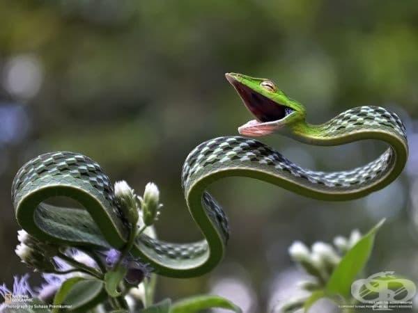 Най-щастливата змия на света.