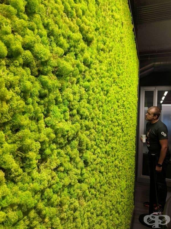 Стена от мъх в офис.