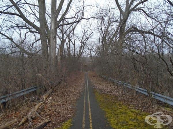 Дърветата постепенно възвръщат територията си.