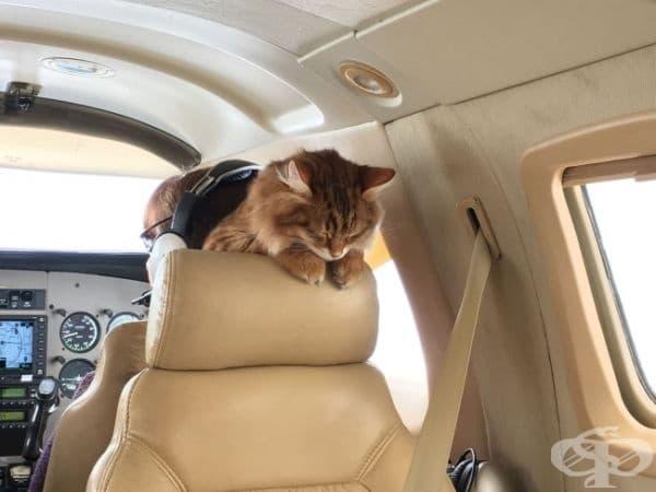Това е котката Дезмънд. Тя също спи в самолета, докато нейния собственик изкарва пари за нея.