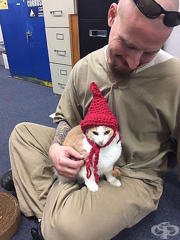Подобни програми за животни са широко разпространени в затворите в САЩ. Една от тях е била създадена в Корекционния комплекс на Монро, наречена Purrfect Pals, и се е оказала много успешна.