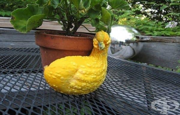 Ето още една патица.