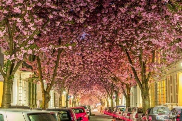 Бон, Германия.
