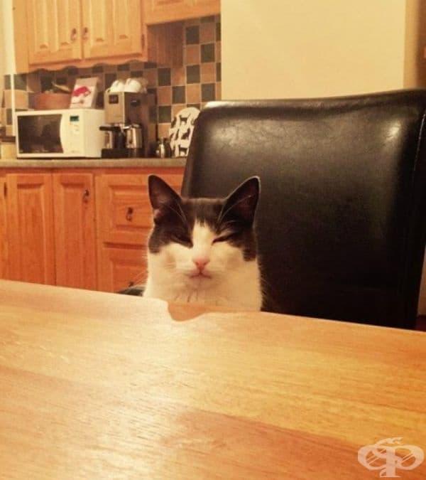 Ритнах купичката с мляко на котката си и не я замених с нова. По време на вечеря тя седна срещу мен и ме погледна така.
