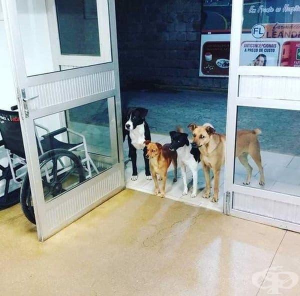 Бездомник се налага да постъпи в болница в Бразилия. Това са кучетата, за които се е грижел. Те стоят на входа и наблюдават какво се случва с него.